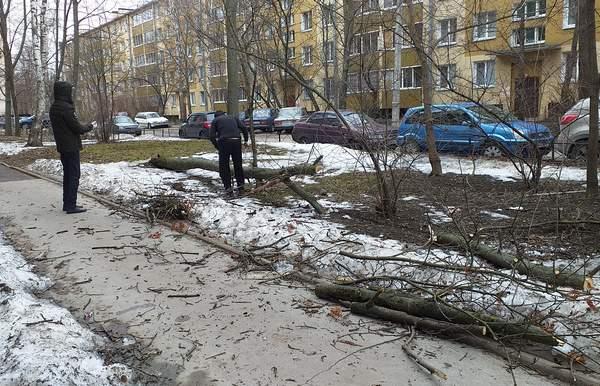 Распилим и уберем упавшее дерево